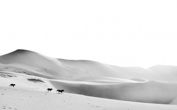 Horses on sand dunes by Matthias Siewert