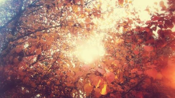 Sunny Autumn by Joel Heaps